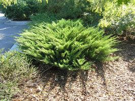 Evergreen Shrubs Spring Tree Farm Innisfil